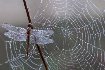 caught-in-web